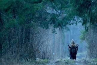 Фотосафари по Беловежской пуще: увидеть диких животных и не только