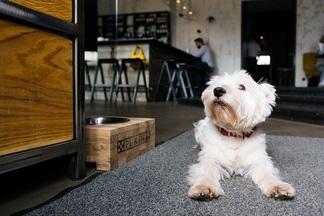 Фотофакт: минский бар, в который можно прийти с собакой