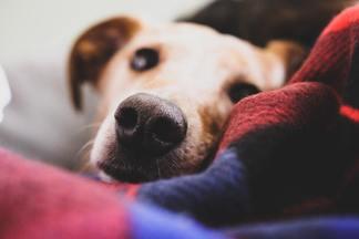 В Минске объявили кастинг на самую обаятельную собаку. Победитель получит 1 000 рублей и абонемент в салон красоты