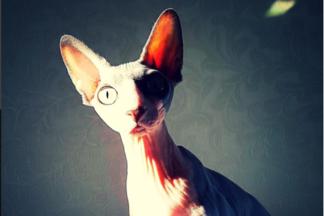 Пять необычных белорусских instagram-аккаунтов, о которых вы еще не знали
