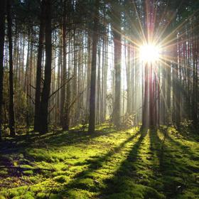 День работника леса в Беларуси