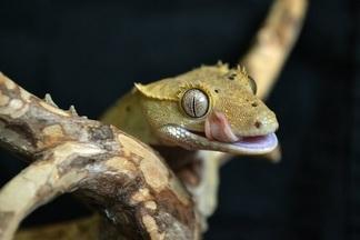 Новый контактный зоопарк: теперь с рептилиями и  генномодифицированными лисицами