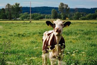 Экологическое против традиционного: белорусские фермеры рассказывают, чем органическая еда отличается от  обыкновенной