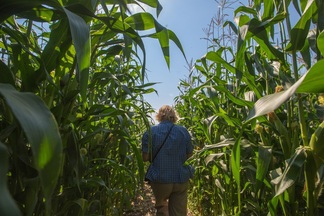 Под Минском открылся комплекс с кукурузным лабиринтом и фудкортом с фермерскими продуктами