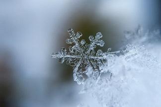 То, что хотелось. На Новый год в Минске обещают снег