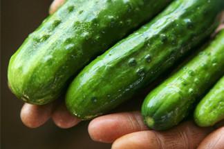 Фермерское хозяйство: как выращивают овощи и фрукты для продажи в  гипермаркетах
