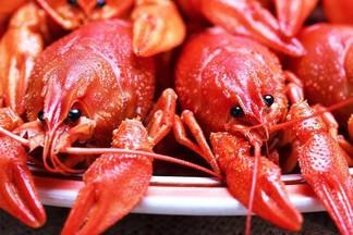 В ресторане «Раковский Бровар» пройдет фестиваль раков