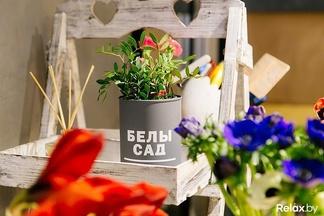 Фотофакт: в Минске открылся лофтовый цветочный бутик с экзотикой и не только