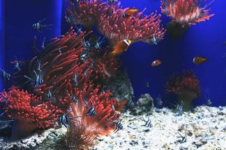 В Galleria Minsk пройдет выставка аквариумных рыбок