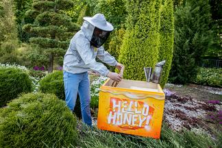 Минчане за неделю «удочерили» 30 тысяч пчел