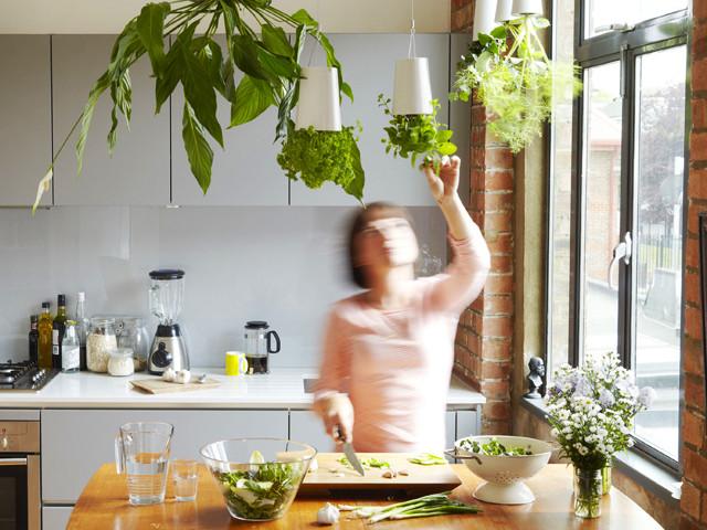 как вырастить капусту на подоконнике